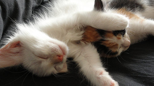 sleepy kittens